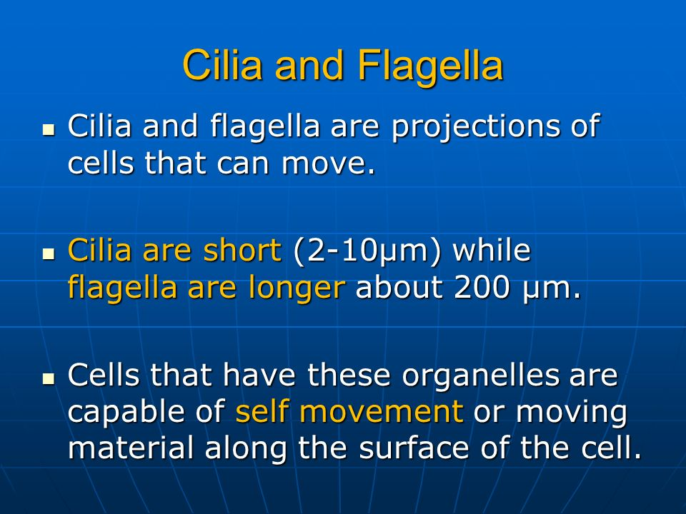 Cilia and FlagellaCilia and flagella are projections of cells that can move. Cilia are short (2-10µm) while flagella are longer about 200 µm.