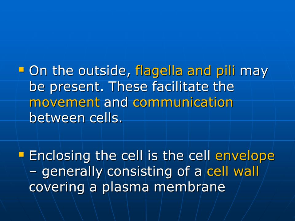 On the outside, flagella and pili may be present