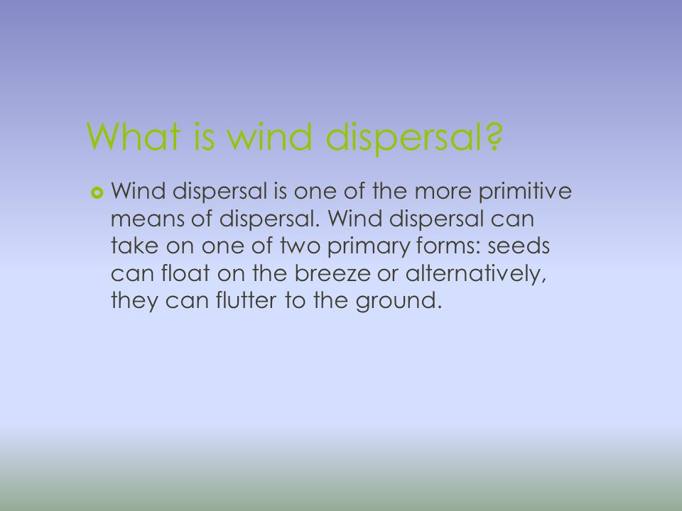 What is wind dispersal