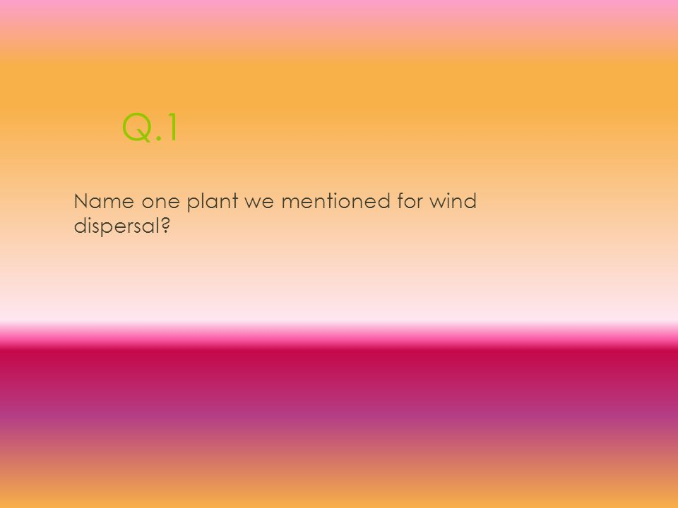 Q.1 Name one plant we mentioned for wind dispersal