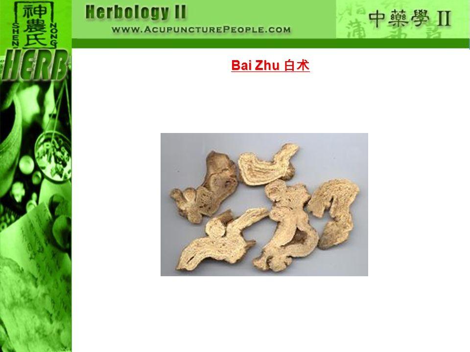 Bai Zhu 白术