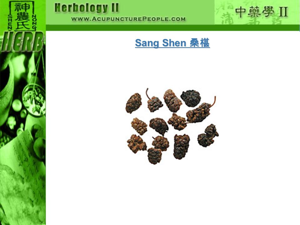 Sang Shen 桑椹