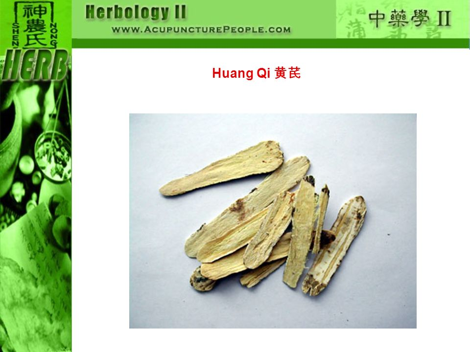 Huang Qi 黄芪