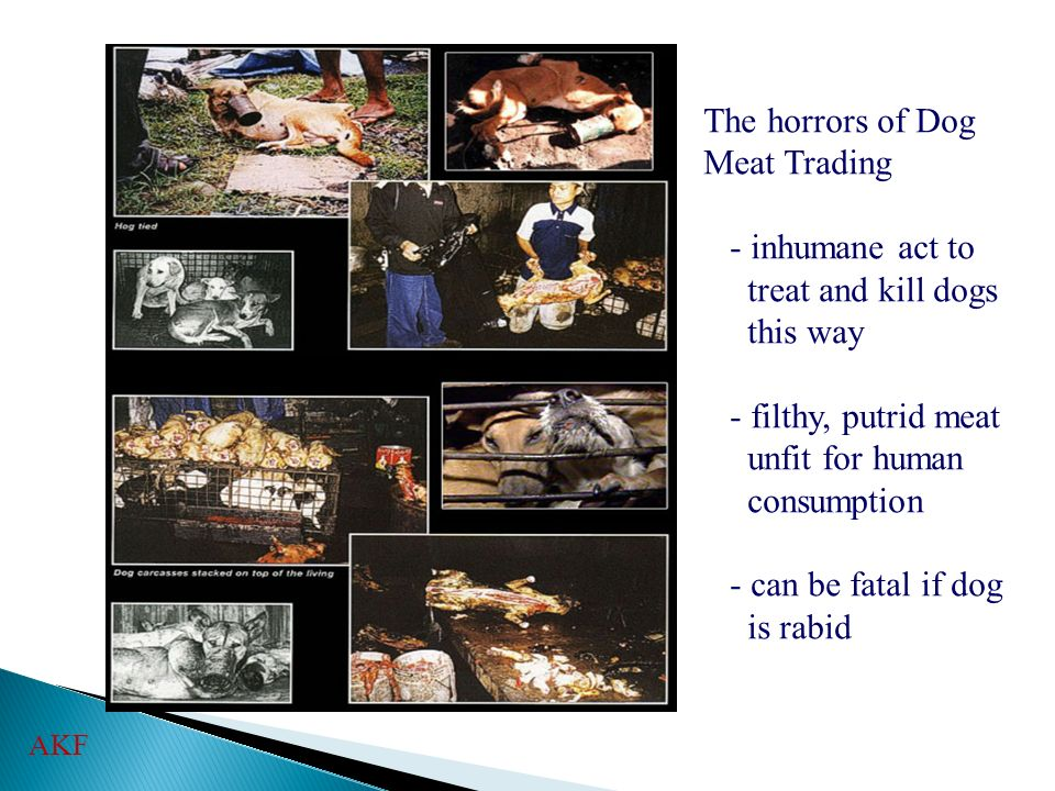 The horrors of Dog Meat Trading - inhumane act to treat and kill dogs