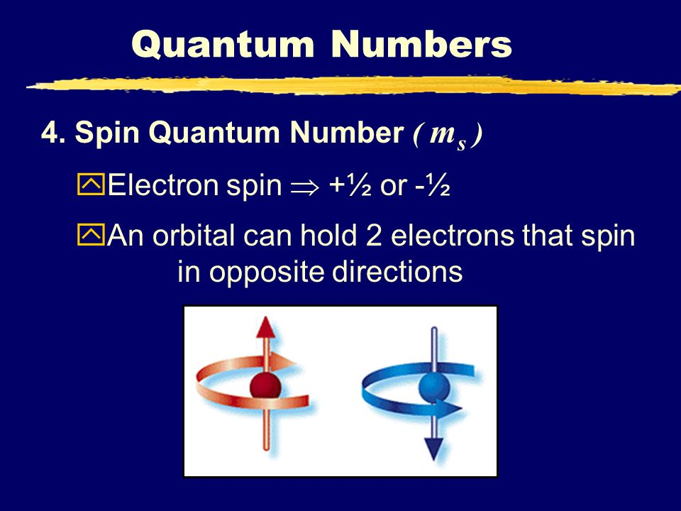 Quantum Numbers 4. Spin Quantum Number ( ms ) Electron spin  +½ or -½