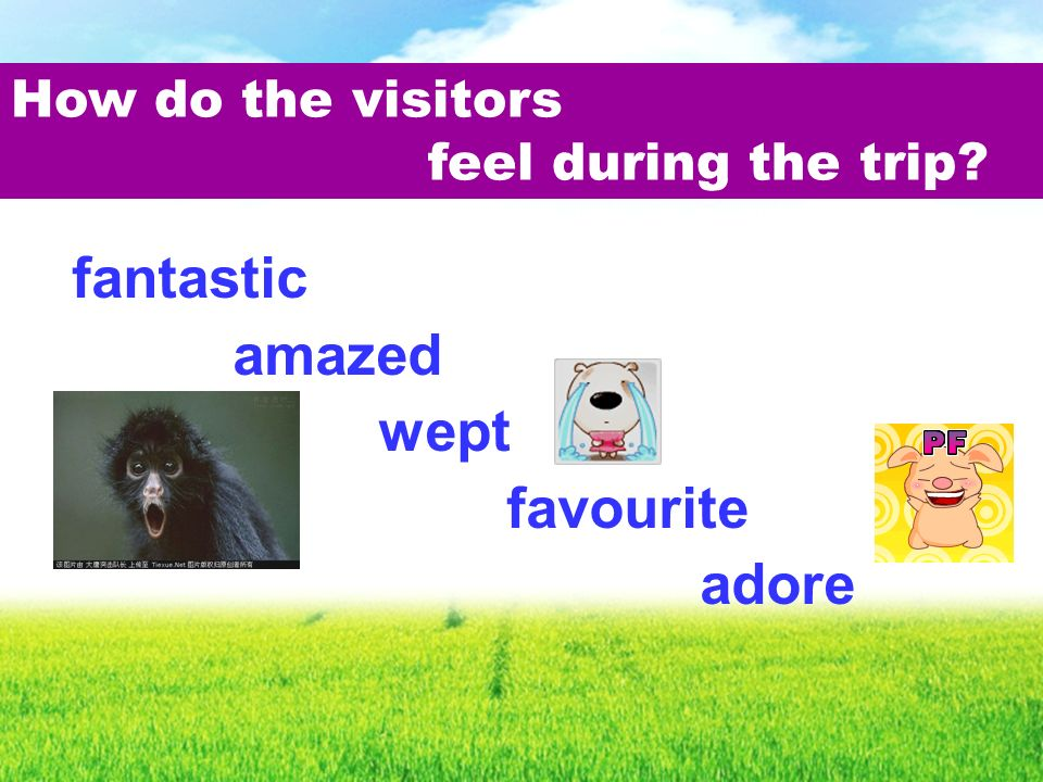 fantastic amazed wept favourite adore How do the visitors