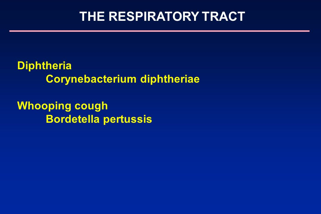 Corynebacterium diphtheriae Whooping cough Bordetella pertussis