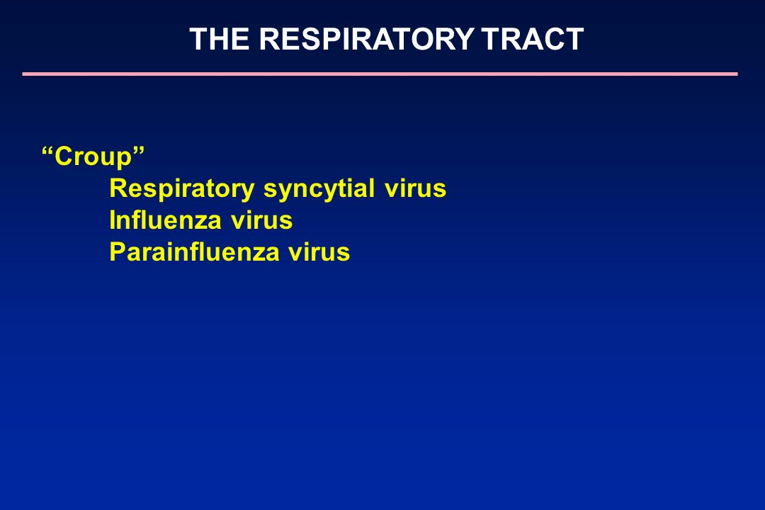 Respiratory syncytial virus Influenza virus Parainfluenza virus