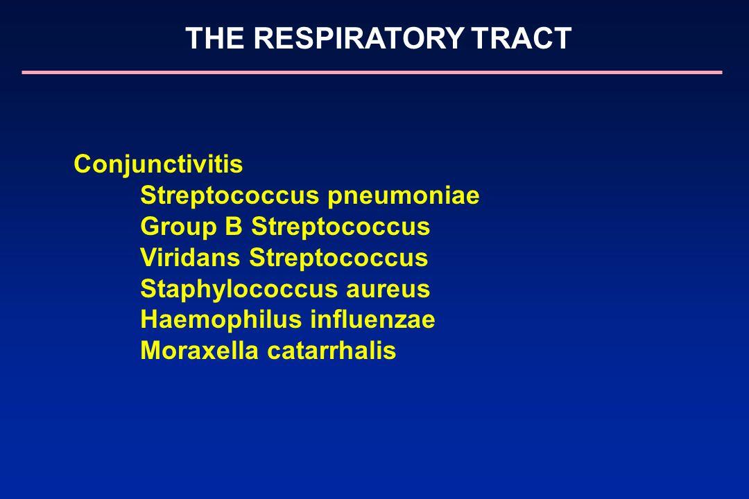 Streptococcus pneumoniae Group B Streptococcus Viridans Streptococcus