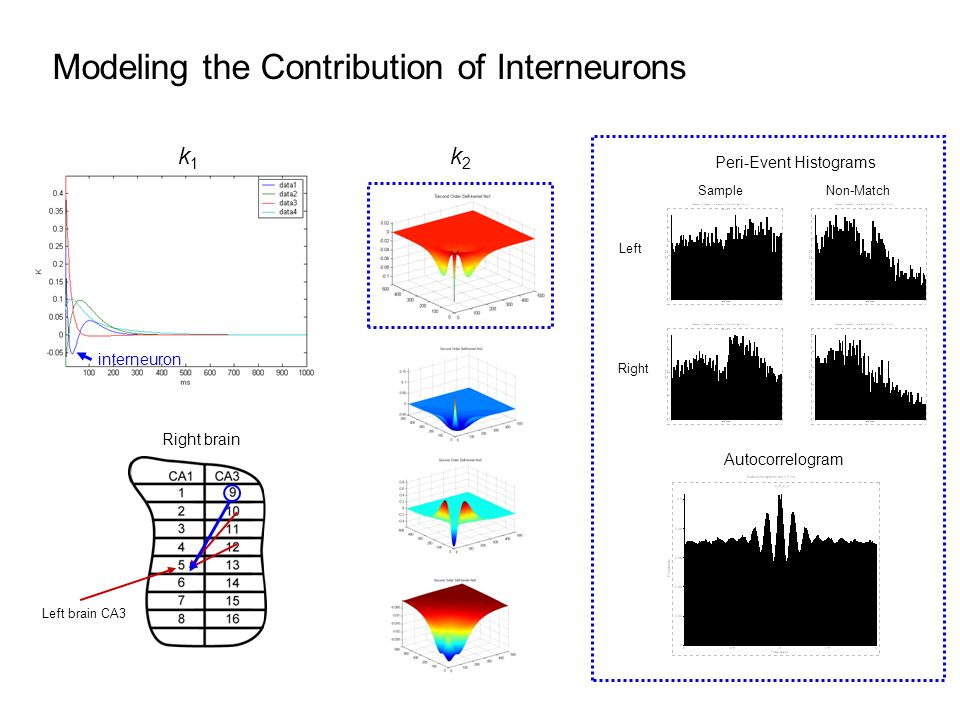 Modeling the Contribution of Interneurons