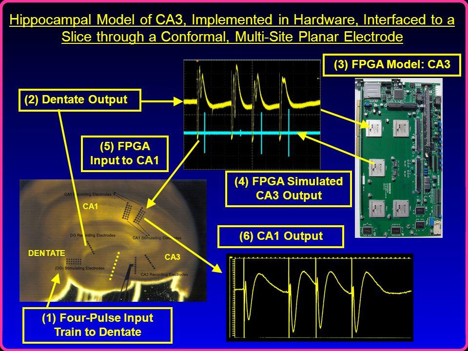 (4) FPGA Simulated CA3 Output (1) Four-Pulse Input Train to Dentate