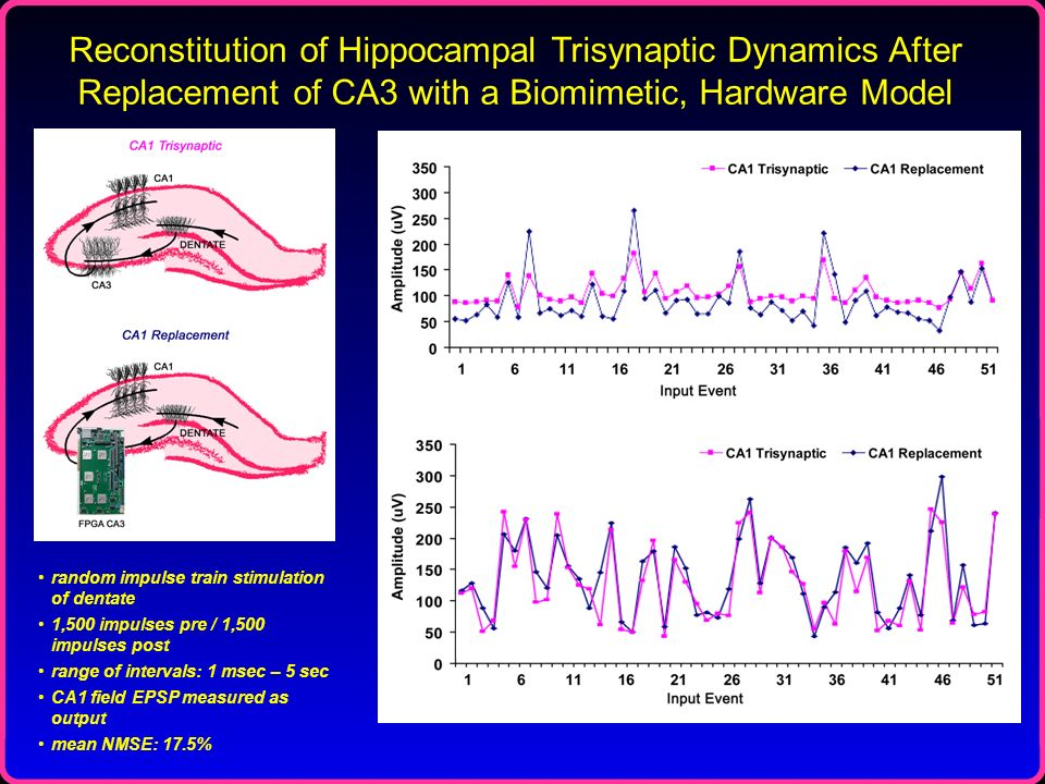 Reconstitution of Hippocampal Trisynaptic Dynamics After Replacement of CA3 with a Biomimetic, Hardware Model