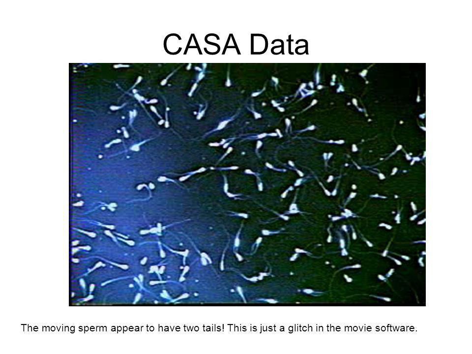 CASA Data The moving sperm appear to have two tails! This is just a glitch in the movie software.