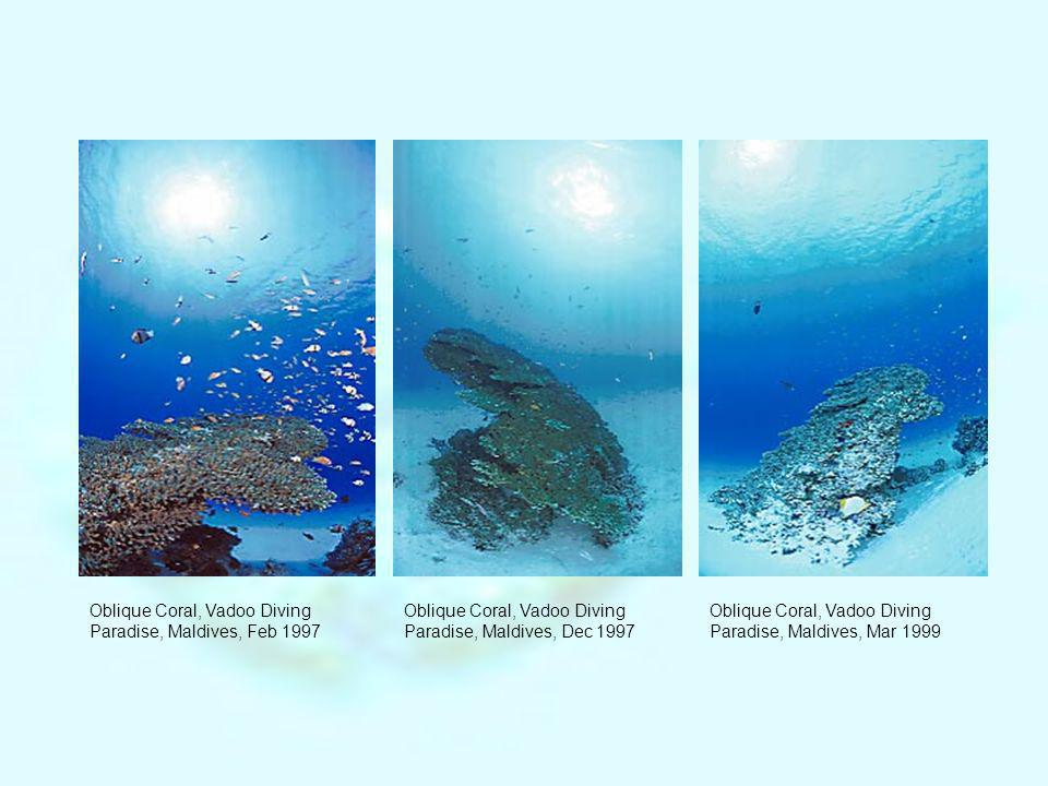 Various types of fish live on this beautiful and healthy coral (patch reef).