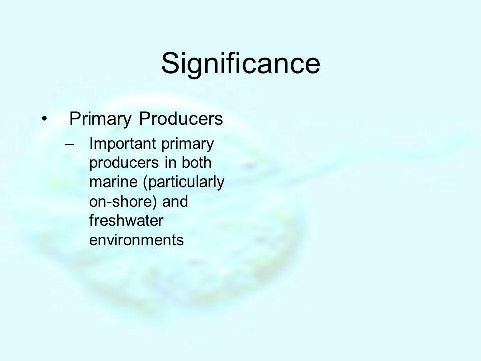 Significance Primary Producers