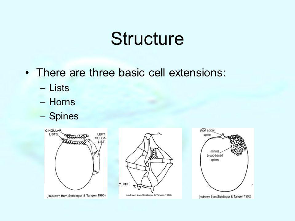 Structure There are three basic cell extensions: Lists Horns Spines