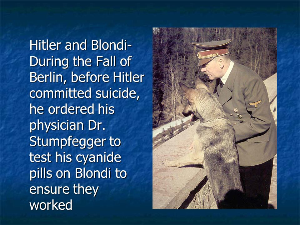 Hitler and Blondi- During the Fall of Berlin, before Hitler committed suicide, he ordered his physician Dr.
