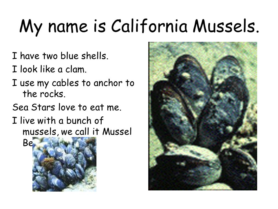 My name is California Mussels.