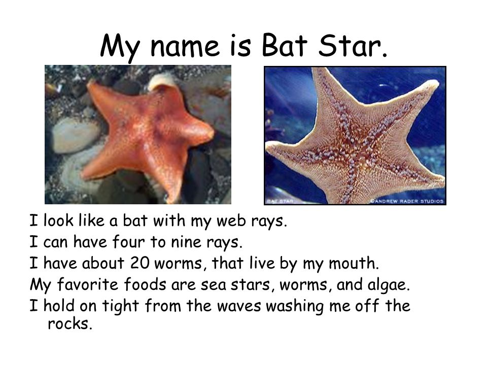 My name is Bat Star. I look like a bat with my web rays.