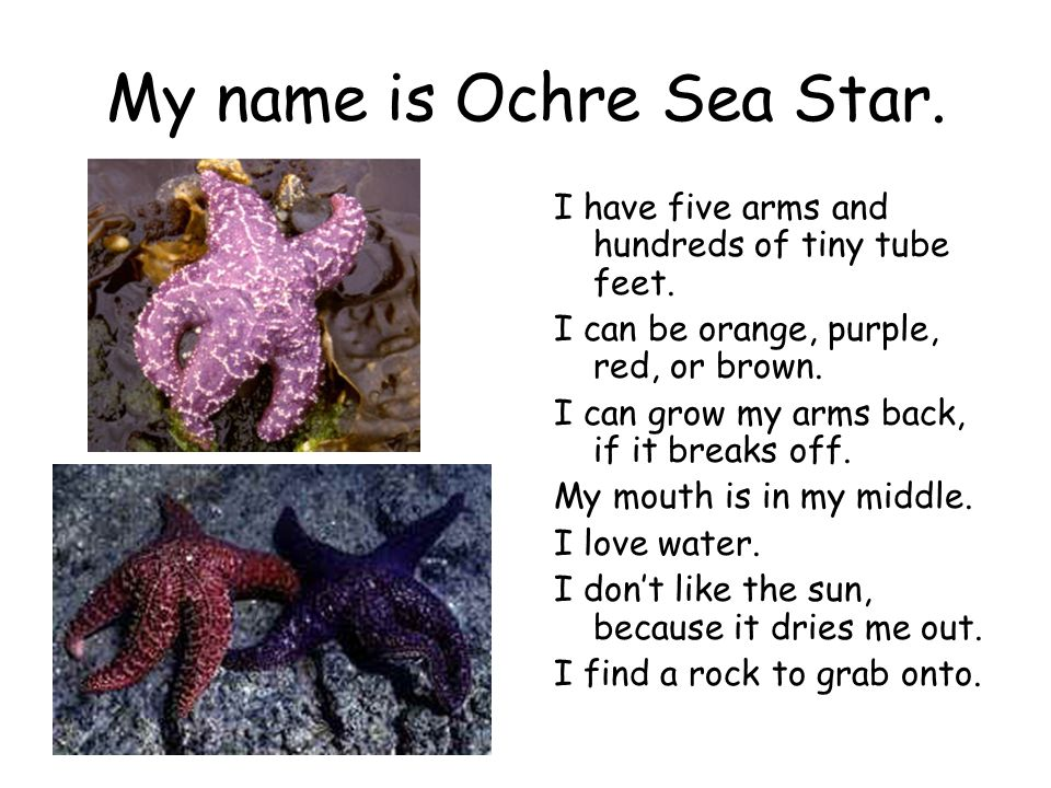 My name is Ochre Sea Star.