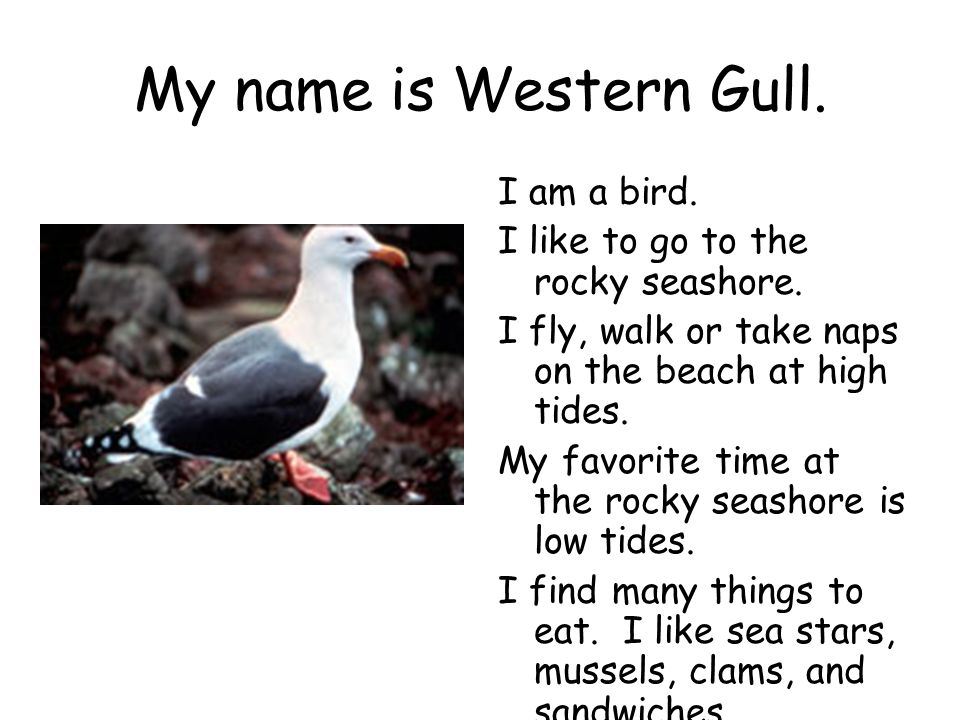 My name is Western Gull. I am a bird.