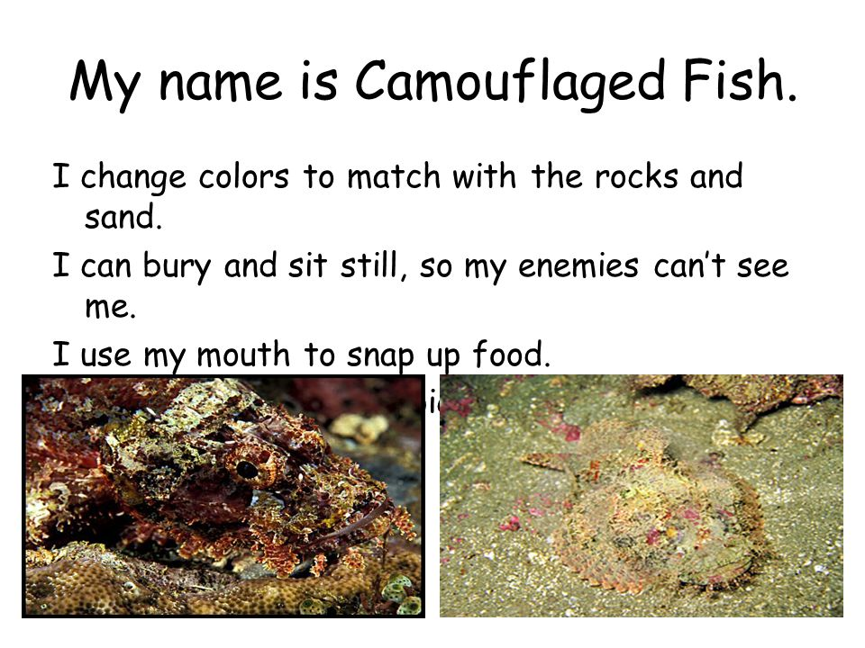 My name is Camouflaged Fish.