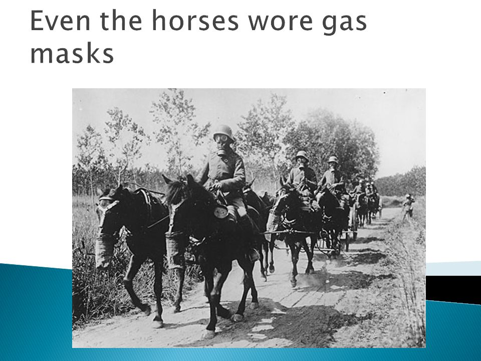 Even the horses wore gas masks