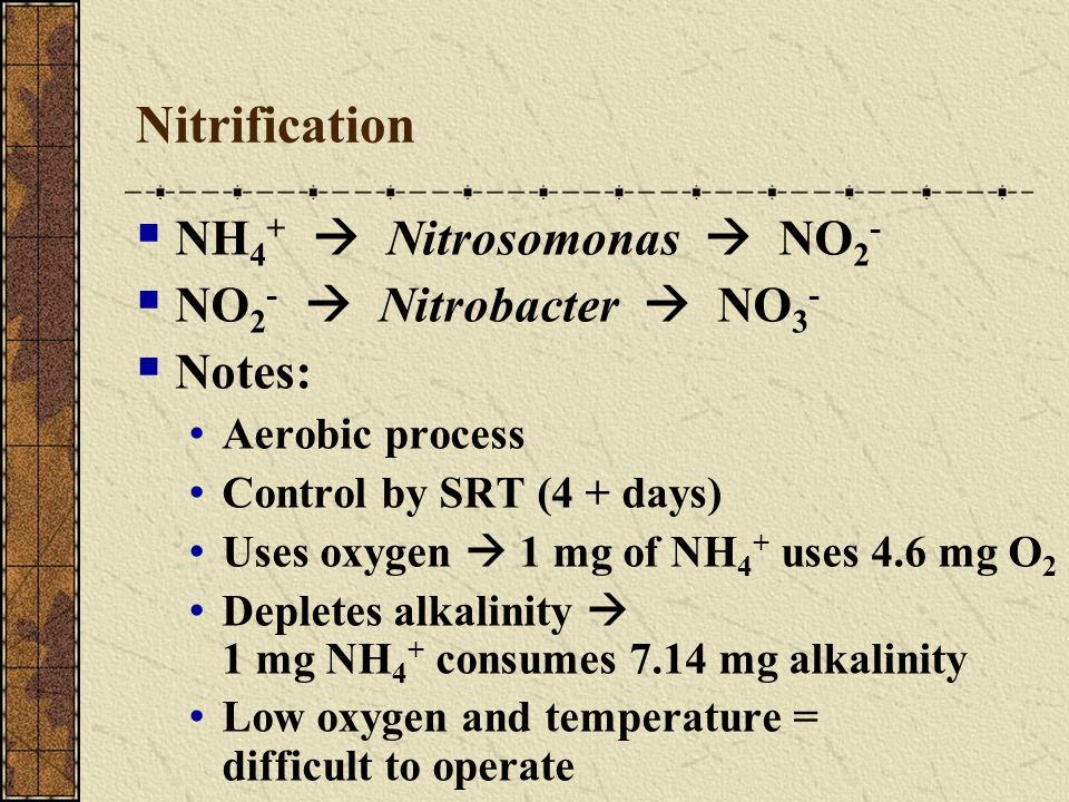 Nitrification NH4+  Nitrosomonas  NO2- NO2-  Nitrobacter  NO3-