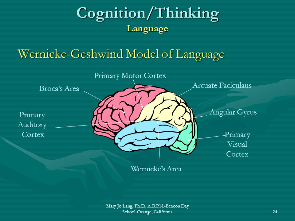 Cognition/Thinking Language