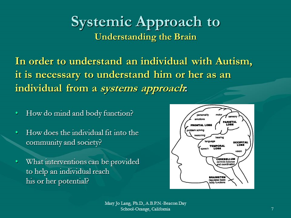 Systemic Approach to Understanding the Brain