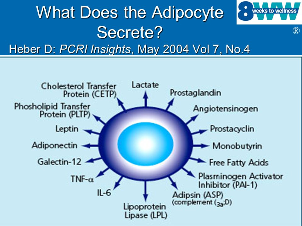 What Does the Adipocyte Secrete