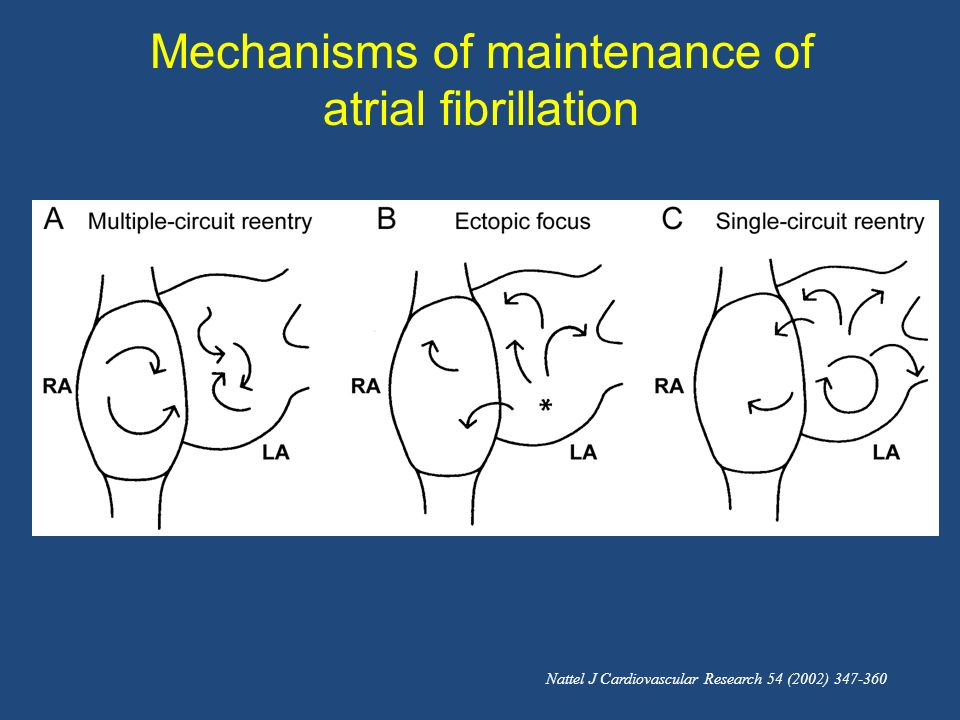 Mechanisms of maintenance of atrial fibrillation