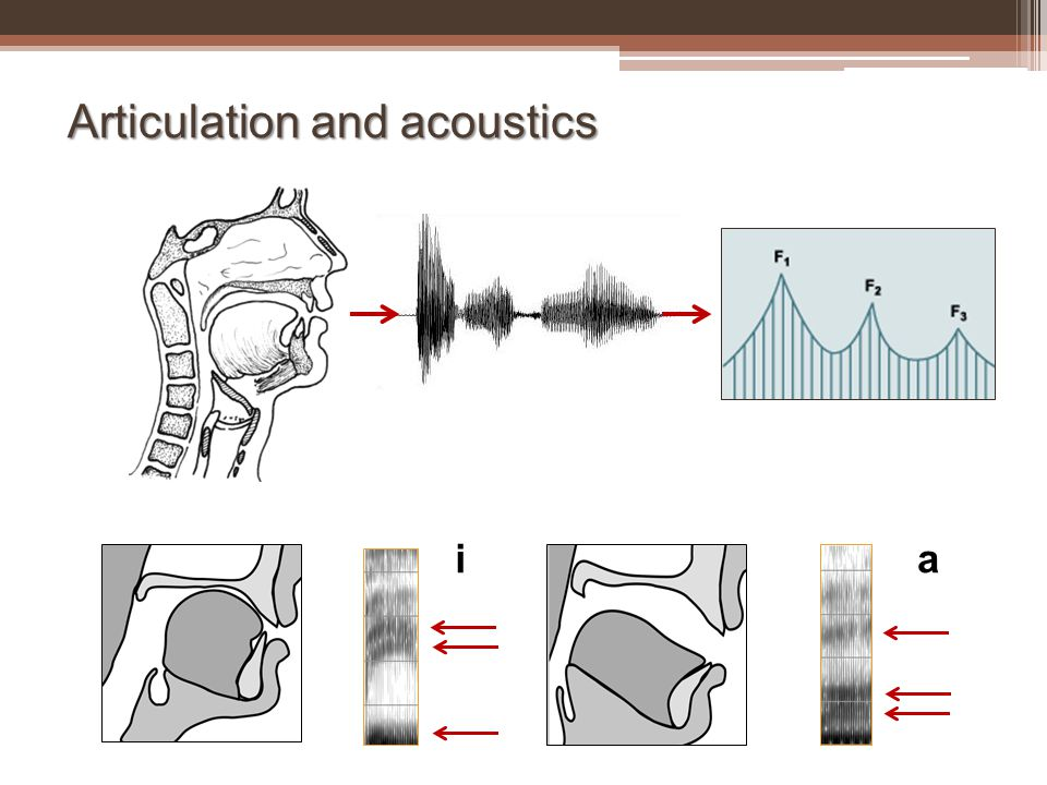 Articulation and acoustics