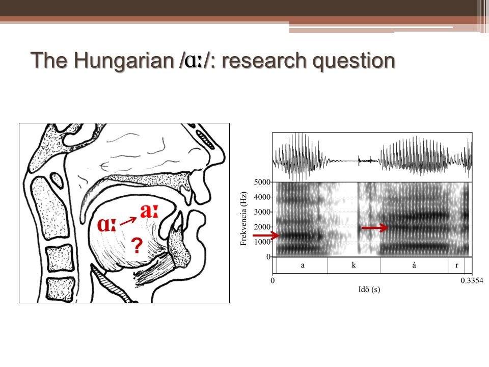 The Hungarian / /: research question