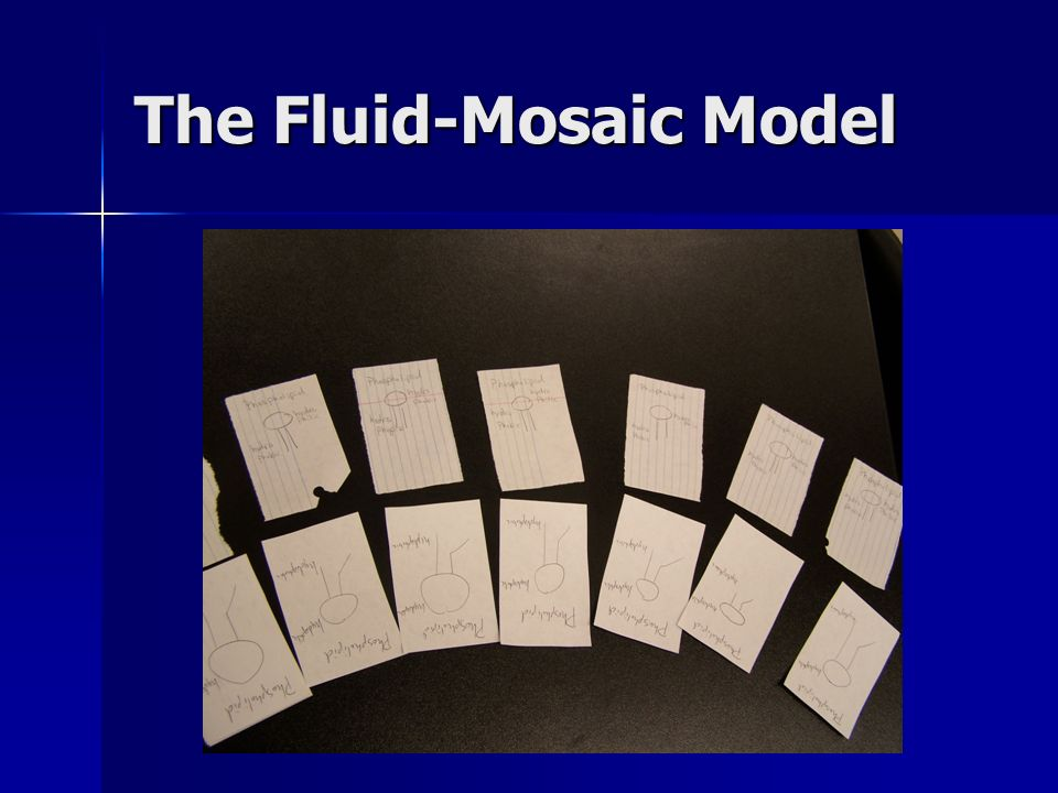 The Fluid-Mosaic Model