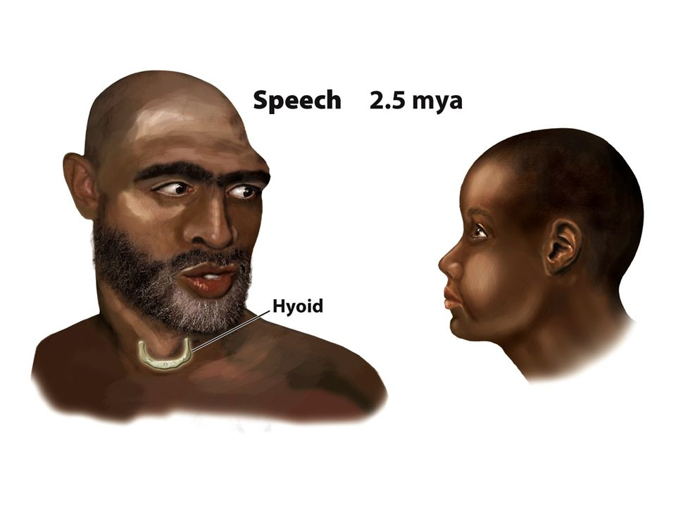 FIGURE 1.4 The Six Big Events of Human Evolution: Bipedalism, Nonhoning Chewing, Dependence on Material Culture, Speech, Hunting, and Domestication of Plants and Animals