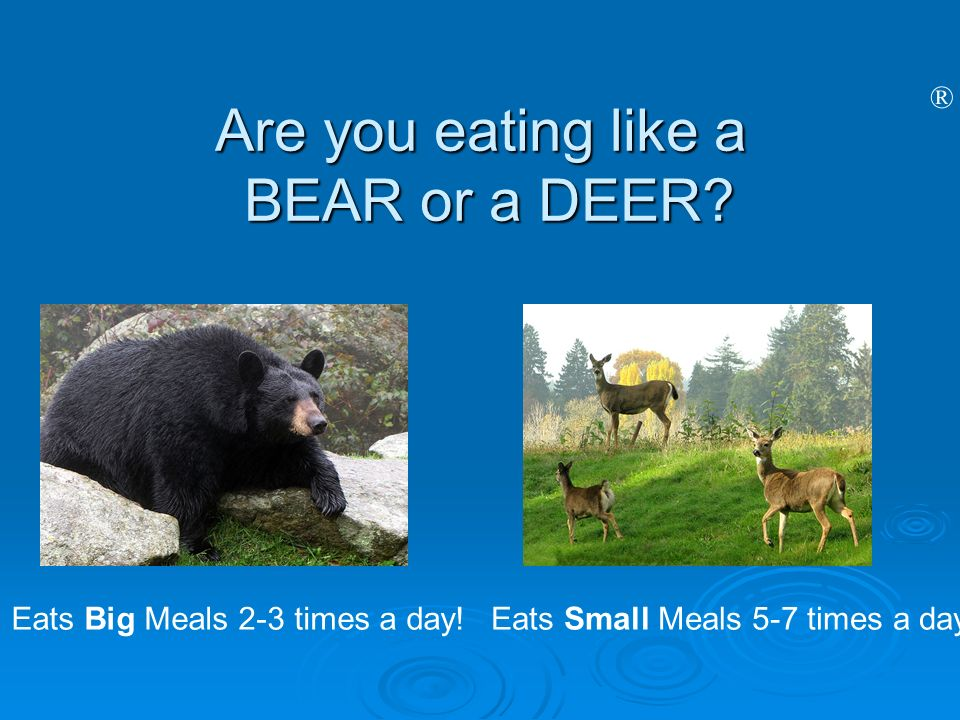 Are you eating like a BEAR or a DEER