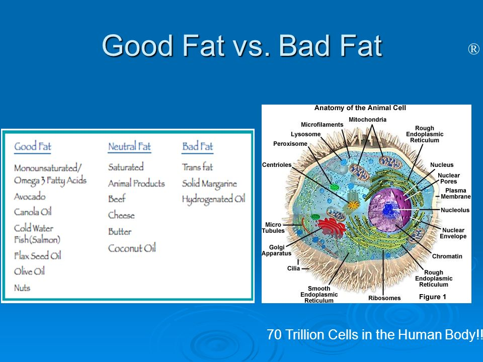 Good Fat vs. Bad Fat 70 Trillion Cells in the Human Body!!