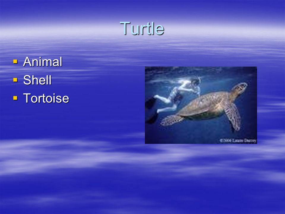 Turtle Animal Shell Tortoise