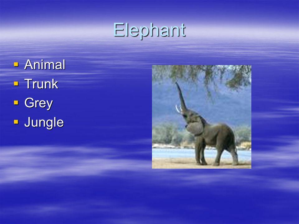 Elephant Animal Trunk Grey Jungle