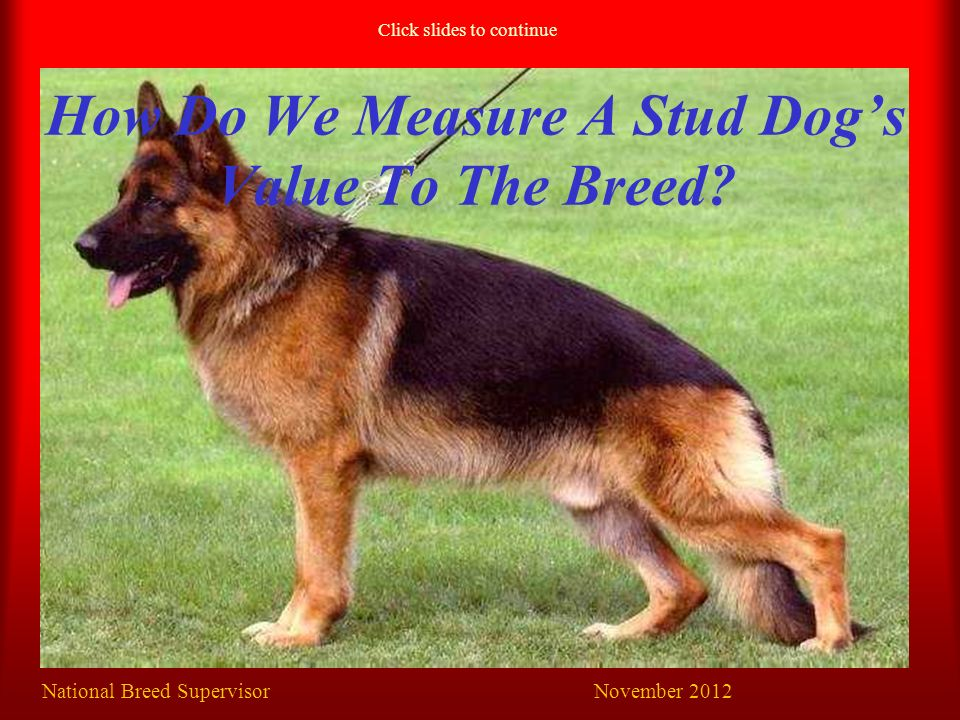 How Do We Measure A Stud Dog's Value To The Breed