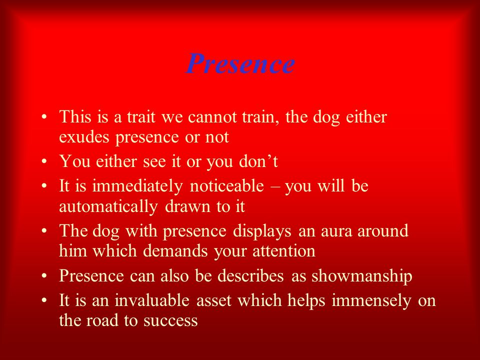 Presence This is a trait we cannot train, the dog either exudes presence or not. You either see it or you don't.