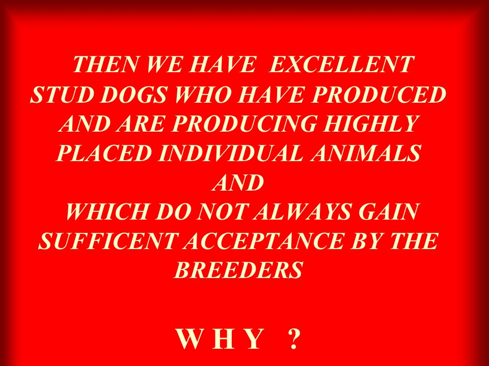 THEN WE HAVE EXCELLENT STUD DOGS WHO HAVE PRODUCED AND ARE PRODUCING HIGHLY PLACED INDIVIDUAL ANIMALS AND WHICH DO NOT ALWAYS GAIN SUFFICENT ACCEPTANCE BY THE BREEDERS W H Y