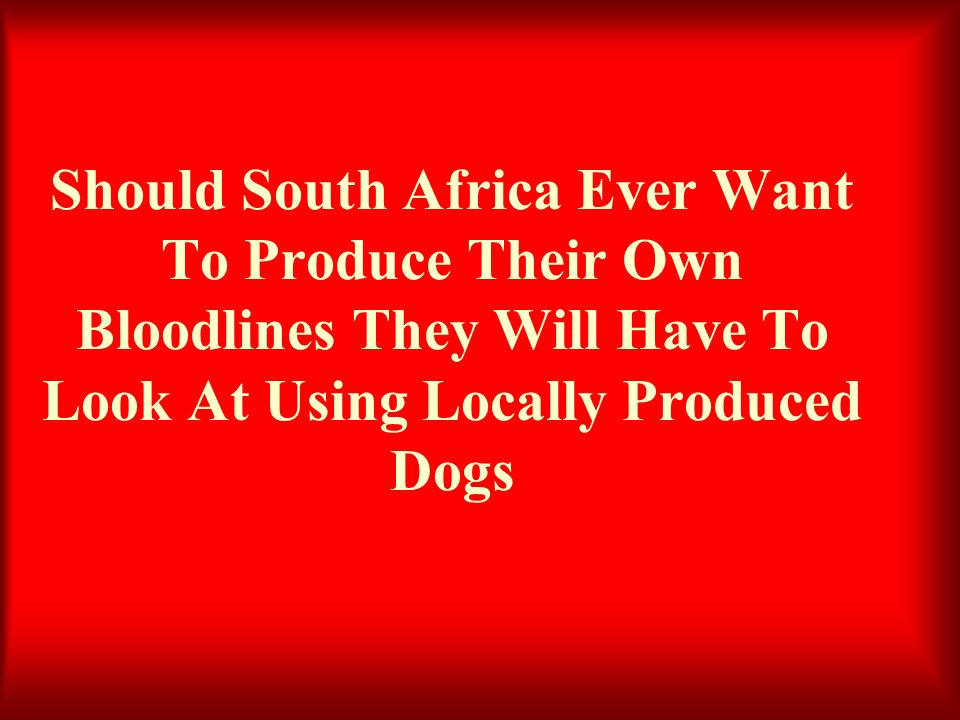 Should South Africa Ever Want To Produce Their Own Bloodlines They Will Have To Look At Using Locally Produced Dogs