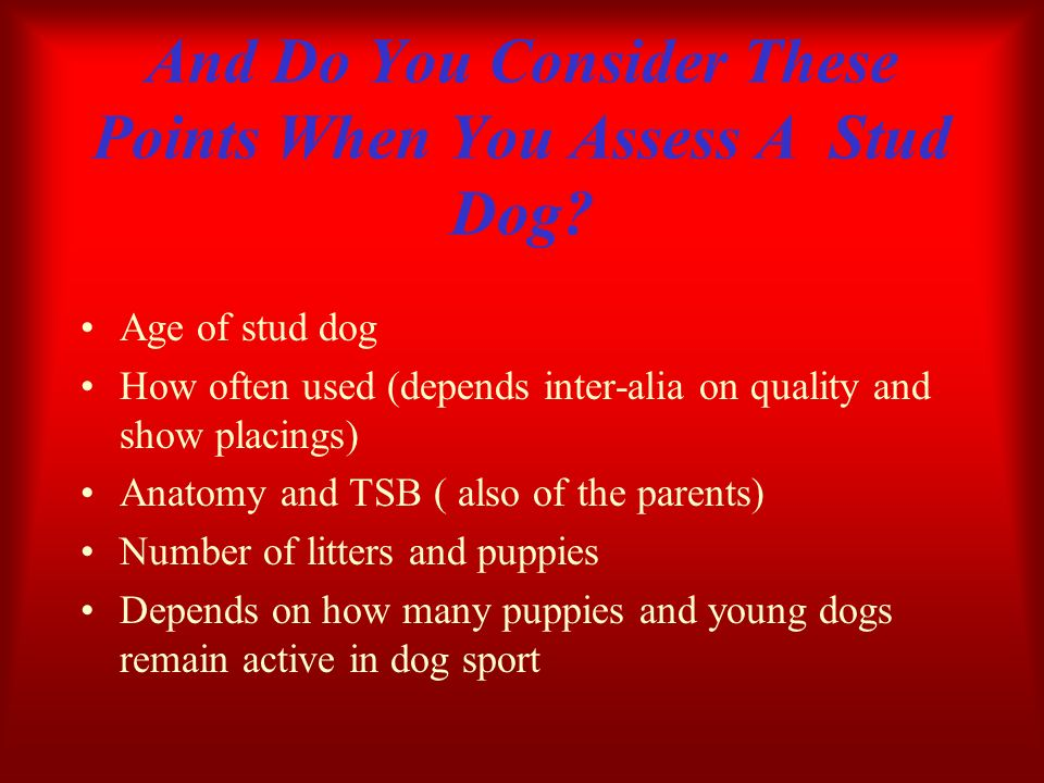 And Do You Consider These Points When You Assess A Stud Dog