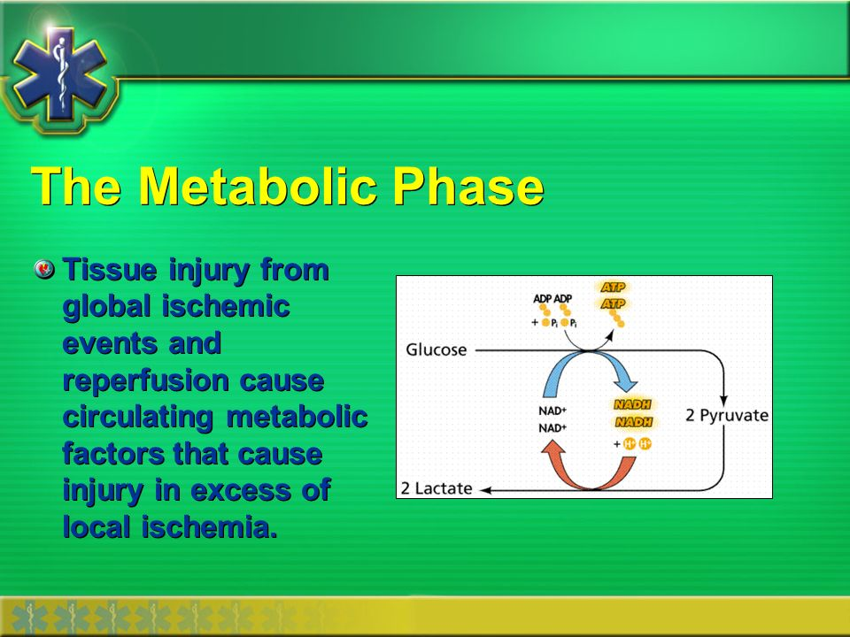The Metabolic Phase