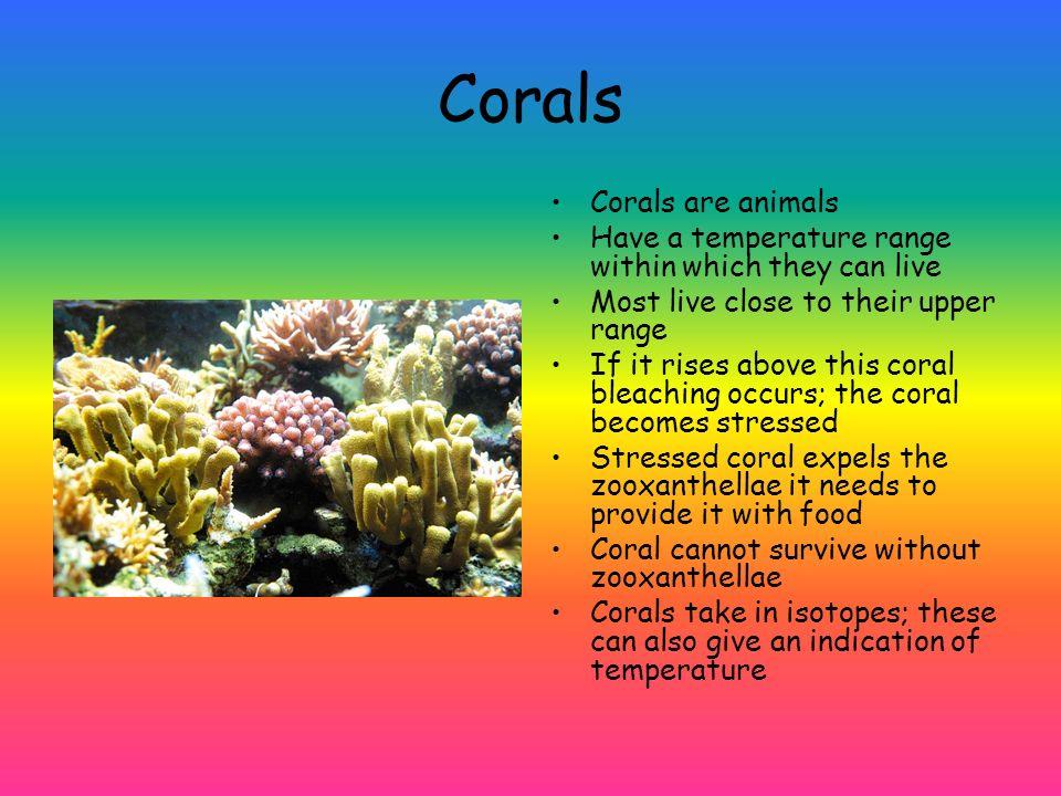 Corals Corals are animals