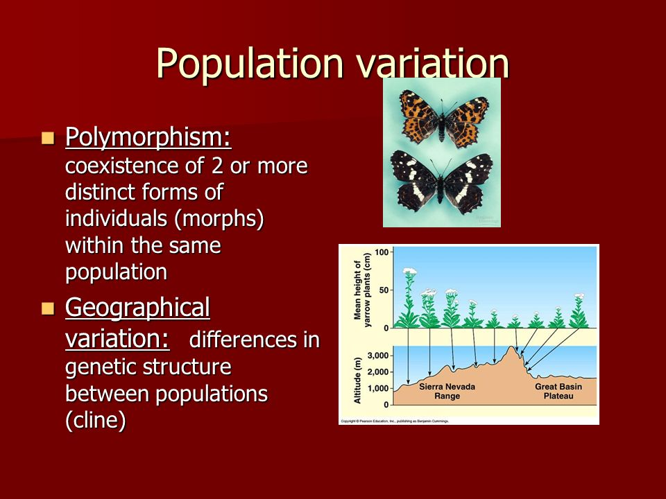 Population variation Polymorphism: coexistence of 2 or more distinct forms of individuals (morphs) within the same population.