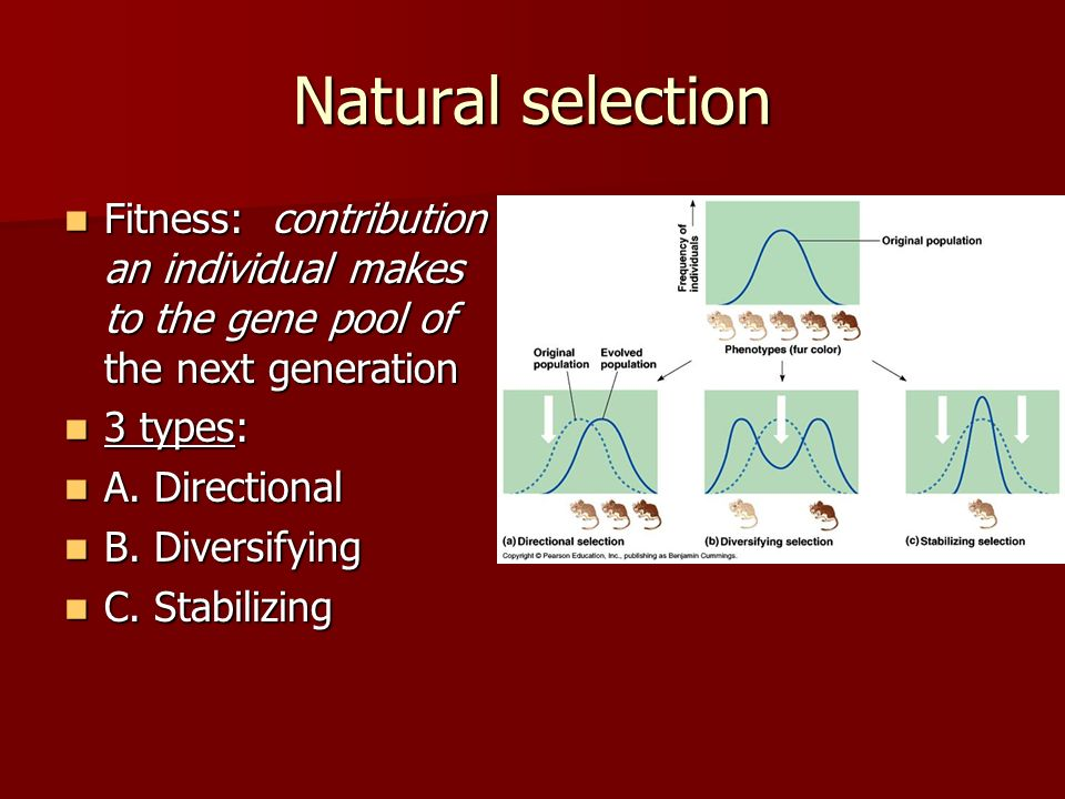 Natural selection Fitness: contribution an individual makes to the gene pool of the next generation.