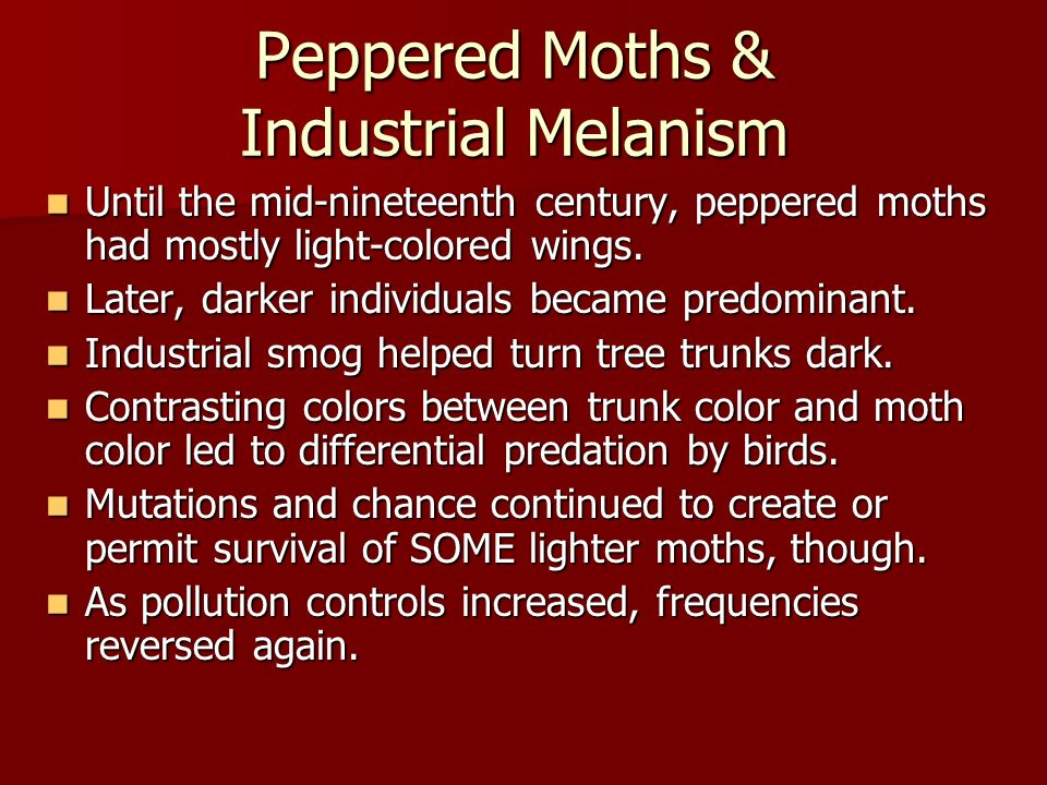 Peppered Moths & Industrial Melanism